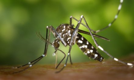 10 Things you did not know about mosquitoes