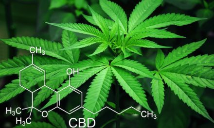 CBD Oil – Why it will not get you high